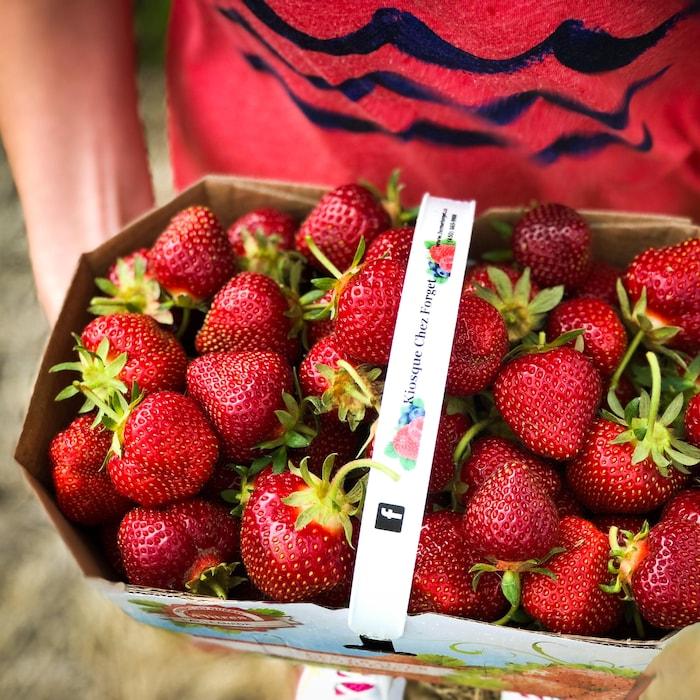 Panier de fraises du Québec fraîches.
