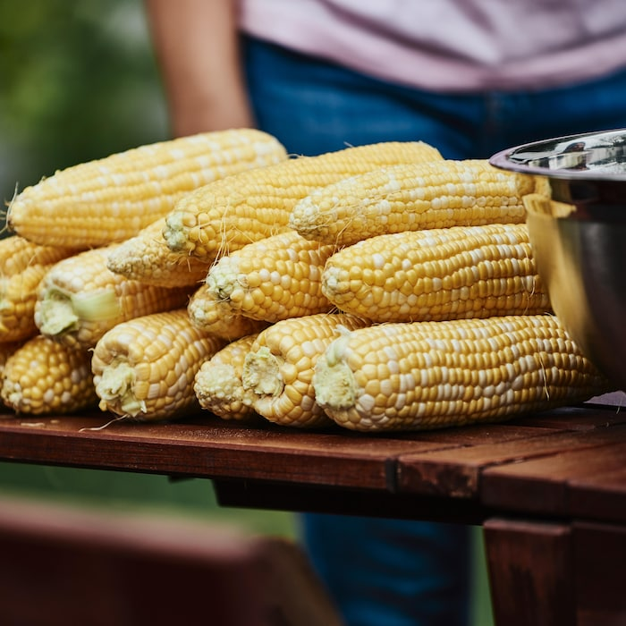 Une dizaine de maïs sont placés près d'un bol.
