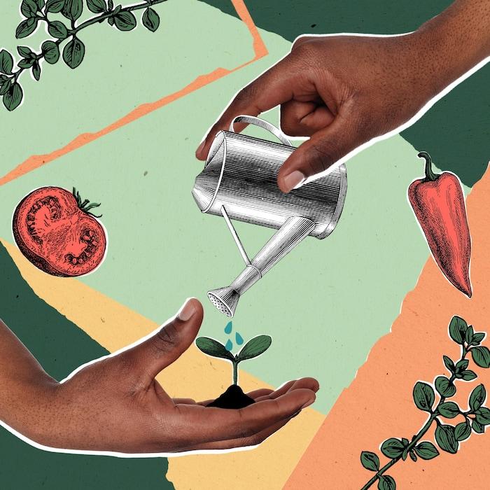 Visuel de semis, de légumes, de jardinage.