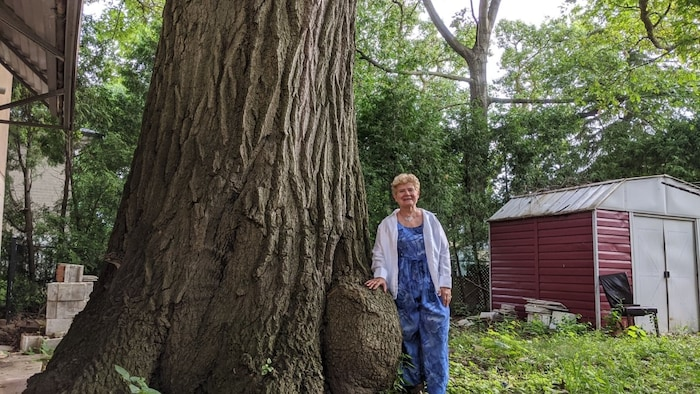 Toronto resident Edith George stands next to the red oak tree that's at least 250 years old. She's spent the last 15 years lobbying to preserve it.