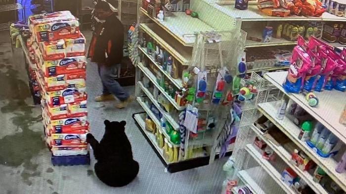 Un oso negro se introdujo en una tienda de la Primera Nación de Neskantaga.