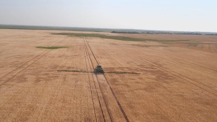 Image aérienne de pulvérisation d'un très grand champ de blé.