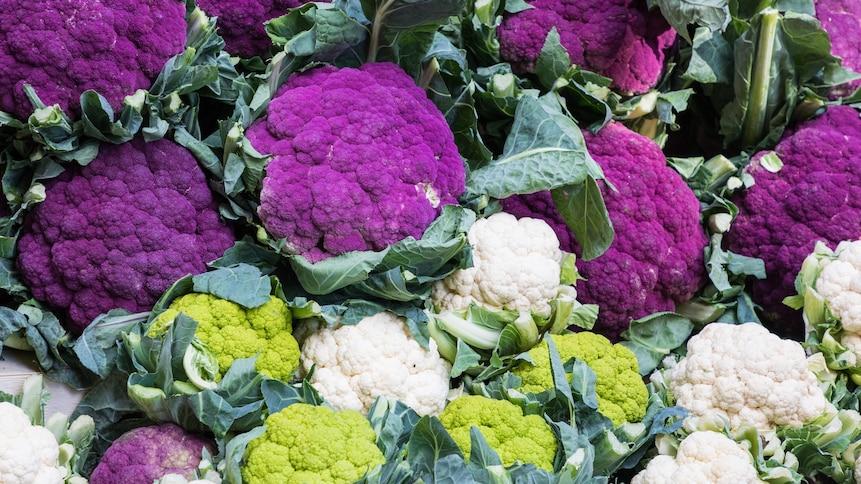 Cette photo nous montre des chou-fleurs de couleurs mauve, blanc et vert.