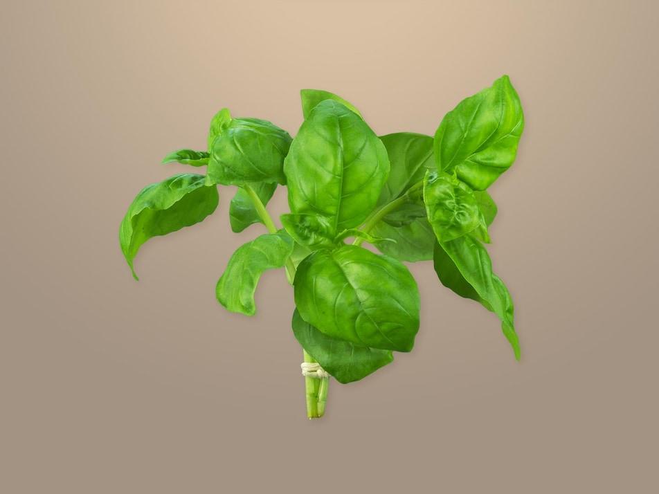 Des feuilles de basilic.