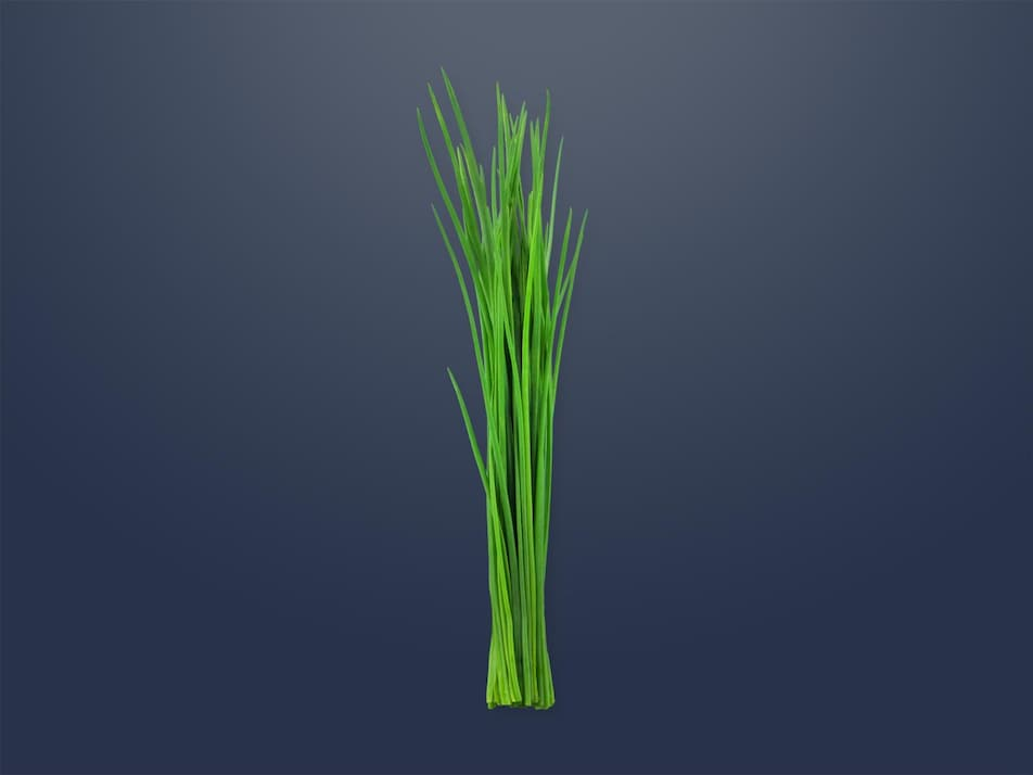 Un bouquet de ciboulette fraîche.