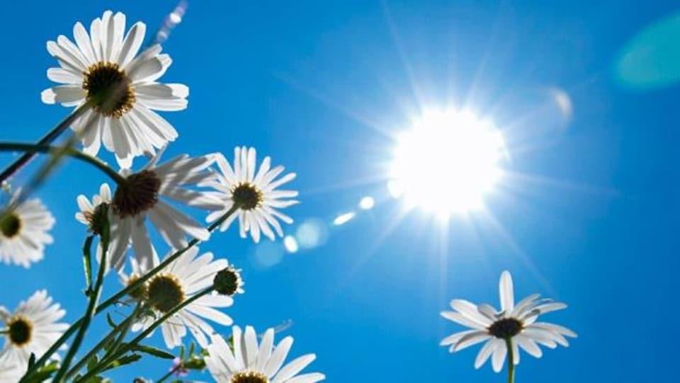 Des fleurs sous un ciel ensoleillé.