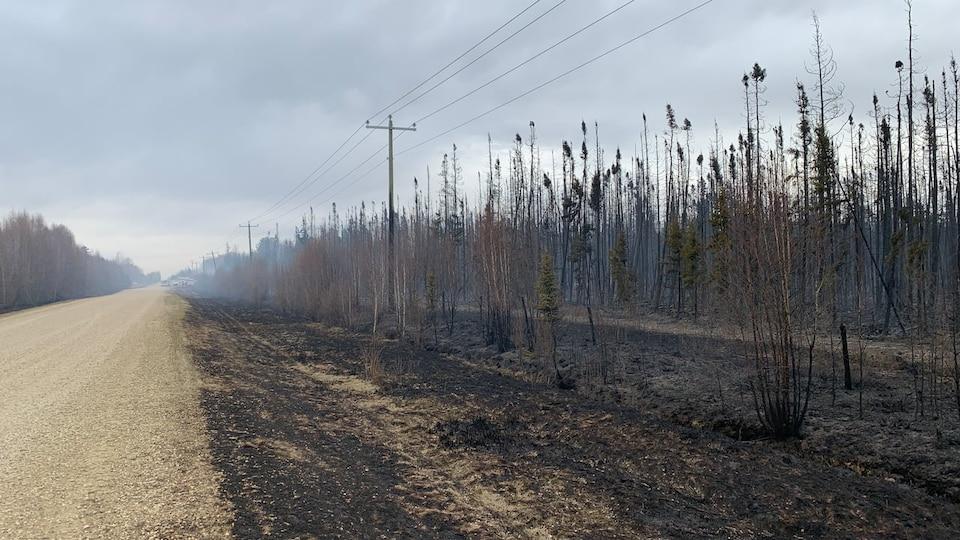 Des champs carbonisés en bordure d'une route.