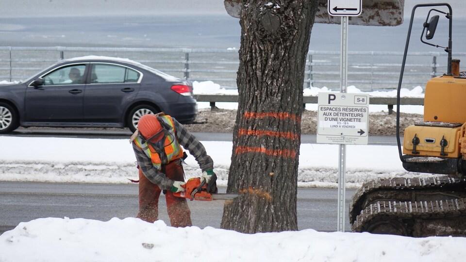 Un employé municipale coupe un arbre à la scie mécanique.