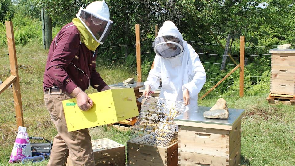 Un homme et une femme portant des filets et des vêtements adaptés, manipulent une ruche remplie d'abeilles dans un champ.