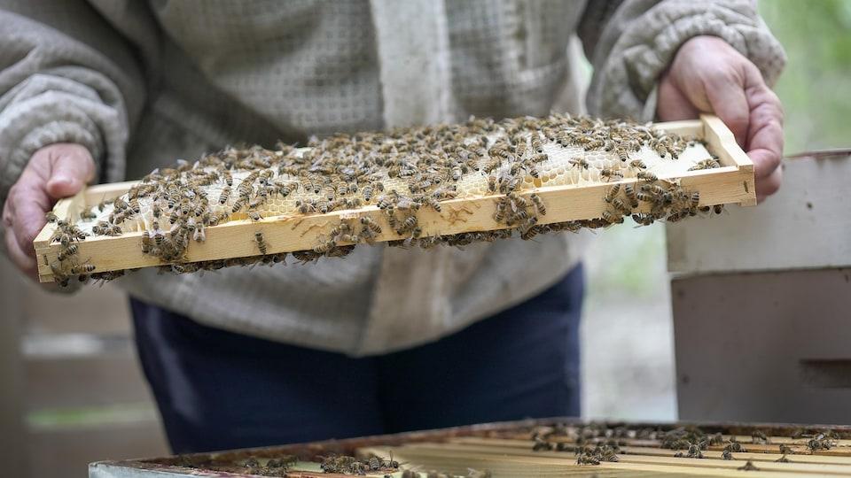 Une femme présente l'intérieur de sa ruche urbaine.