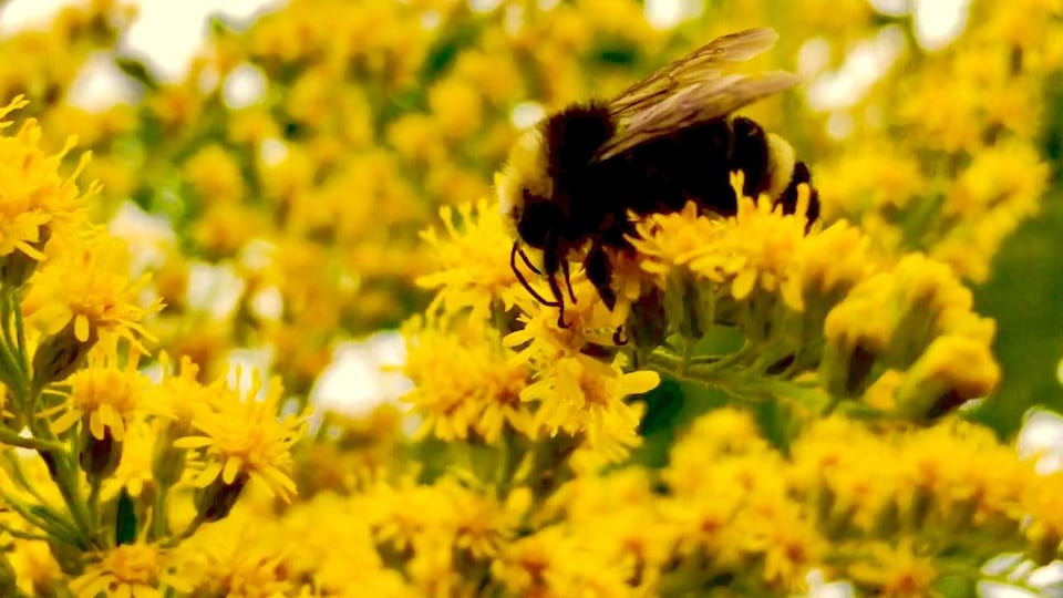 Une abeille dans un champ de fleurs.