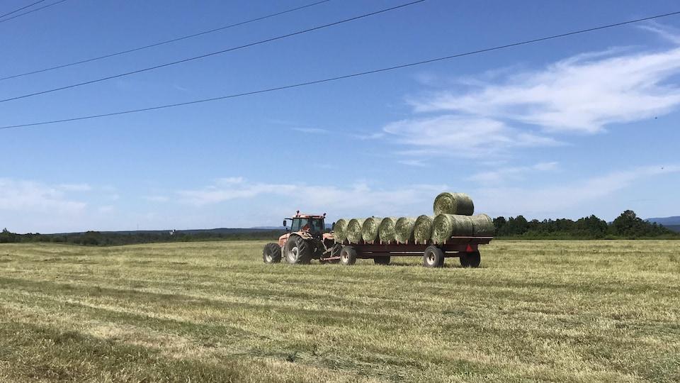 Un tracteur transporte des ballots de foin.
