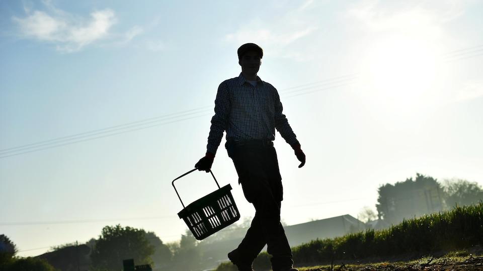 Silhouette d'un homme marchant dans un champ de légumes, un panier à la main.