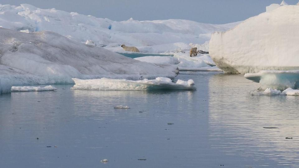 Un ours polaire et un ourson sur la banquise.
