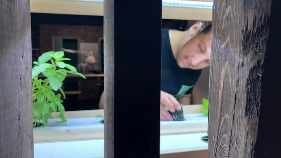 Alexandre Chamberland regarde les plantes qui poussent dans son système