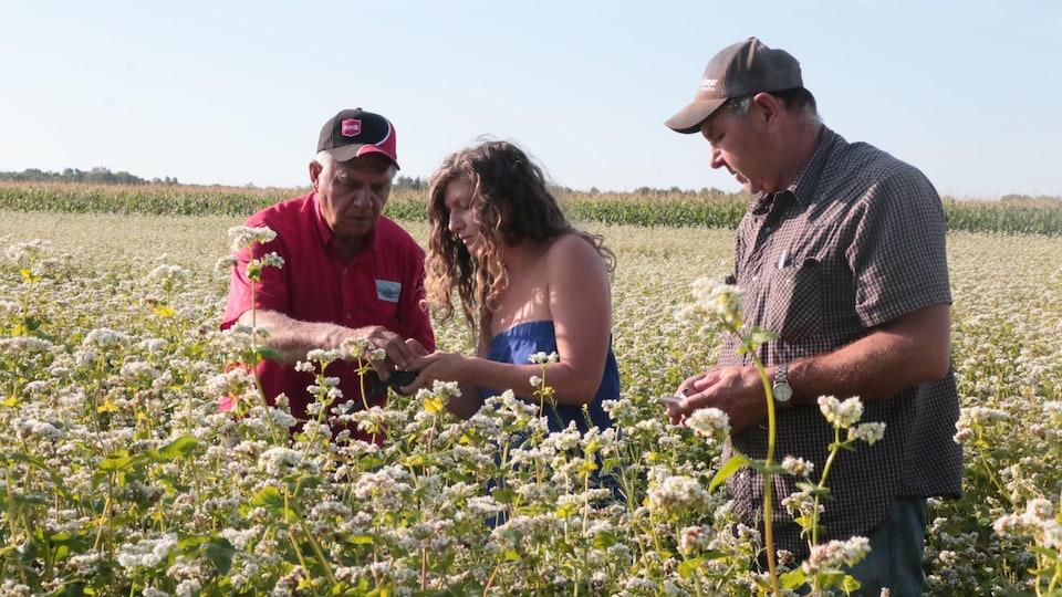 Une femme et deux hommes vérifient le niveau de sucre et de protéines des plantes dans un champ de sarrasin.