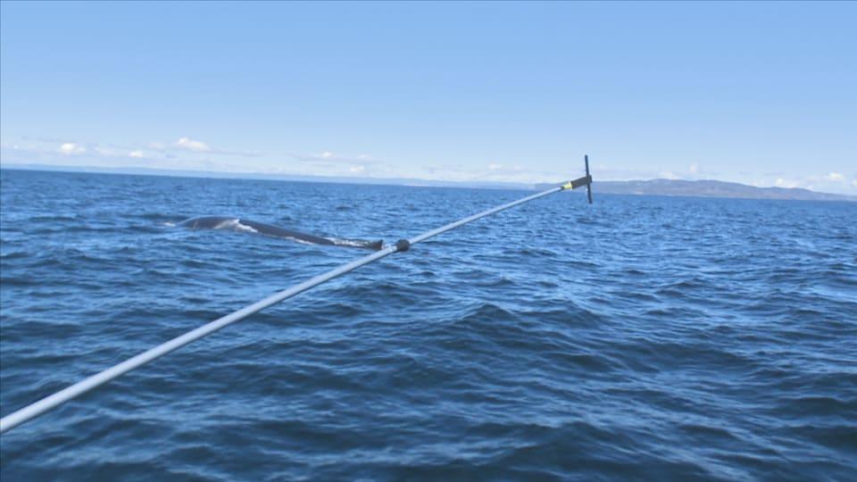 Une longue perche et un plus loin une baleine qui fait surface.