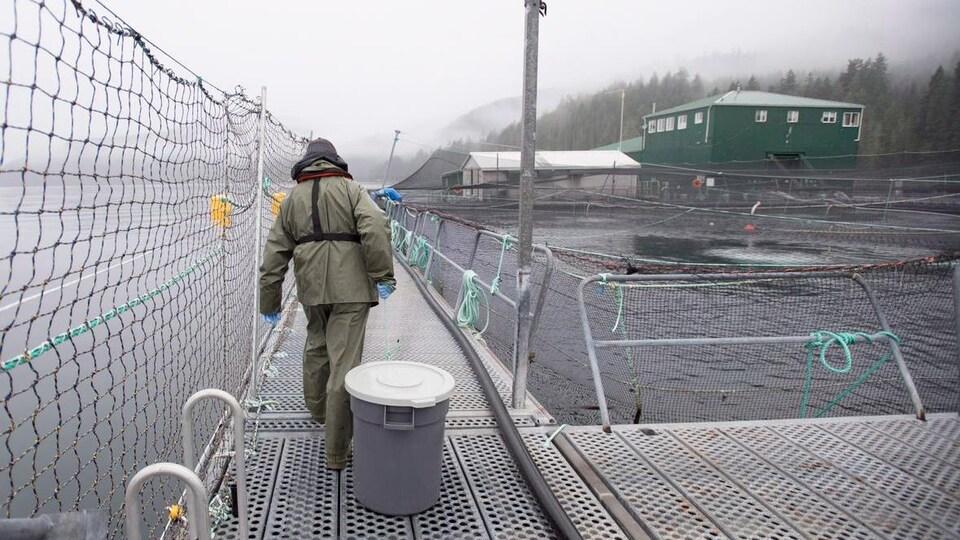 Un homme traîne un bac à l'aquaculture Okisollo près de Campbell River en C.-B.