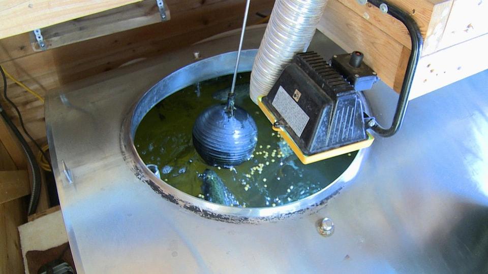 L\'aquaponie : cultiver des légumes et élever des poissons chez soi ...