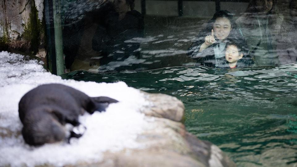 Des visiteurs regardent les loutres de mer à l'Aquarium de Vancouver.