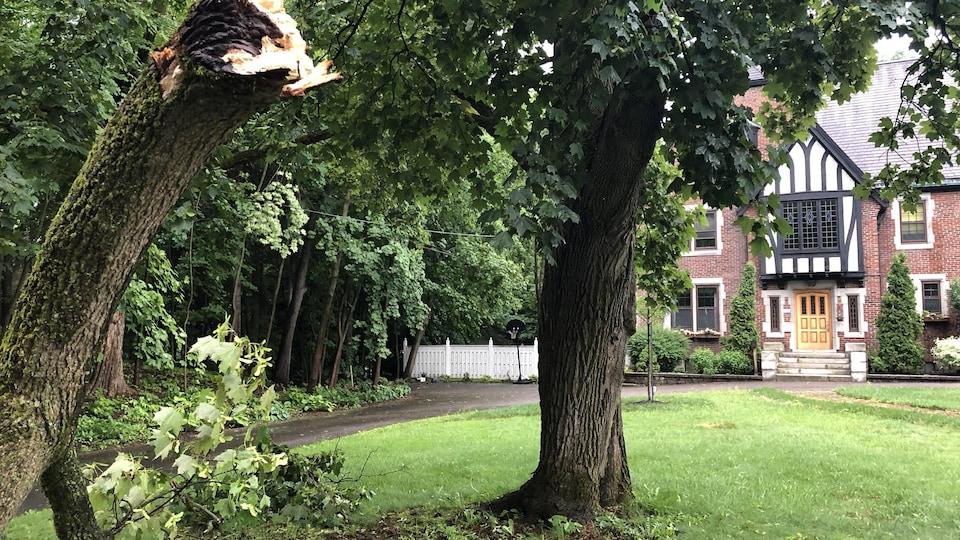 Une branche d'arbre cassée sur le trottoir près d'une maison