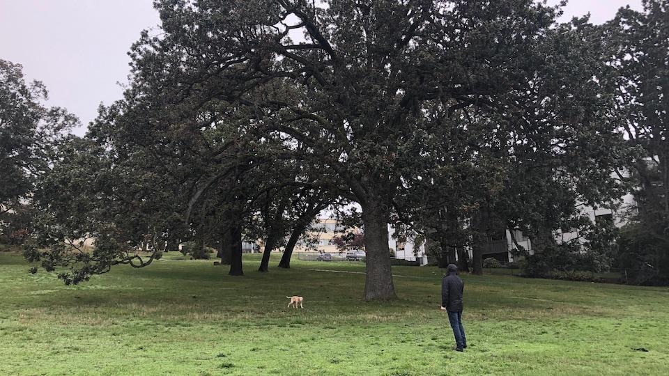 Un homme joue à lancer la balle à son chien dans un parc de Victoria.