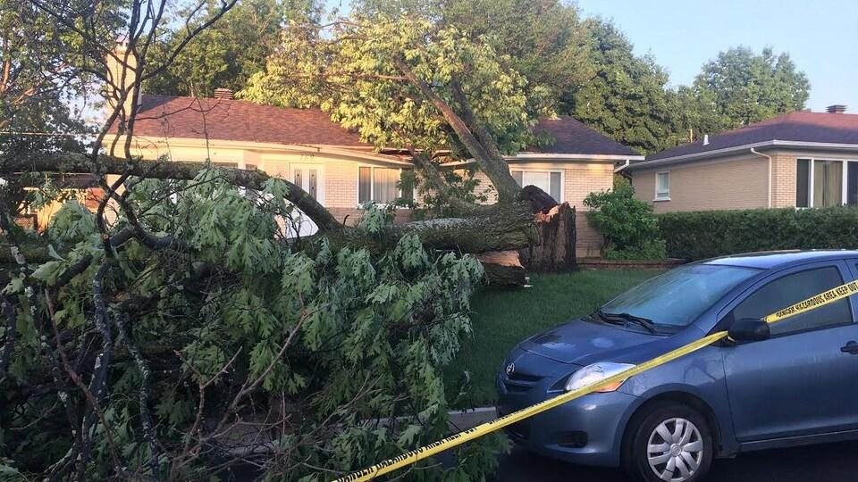 Un arbre est tombé sur la rue Lessard, à Québec.