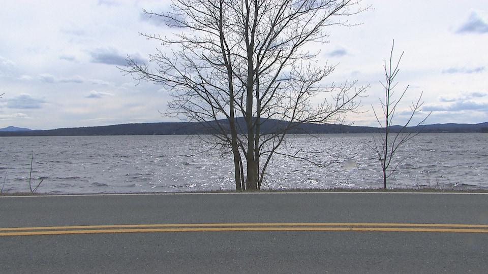 Un arbre devant un lac.