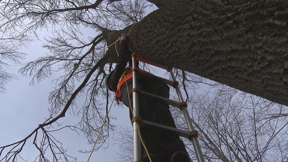 Travailleuse dans une échelle près d'un arbre