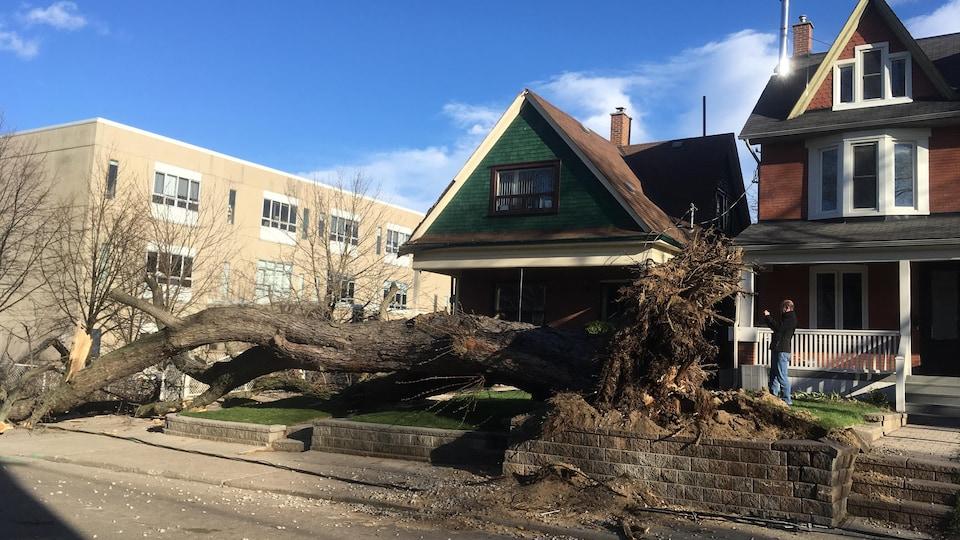Un arbre déraciné devant une maison