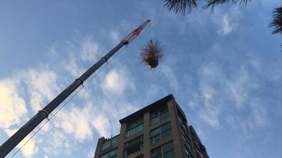 Une imposante grue enlève un arbre mort du sommet d'une tour d'habitation.