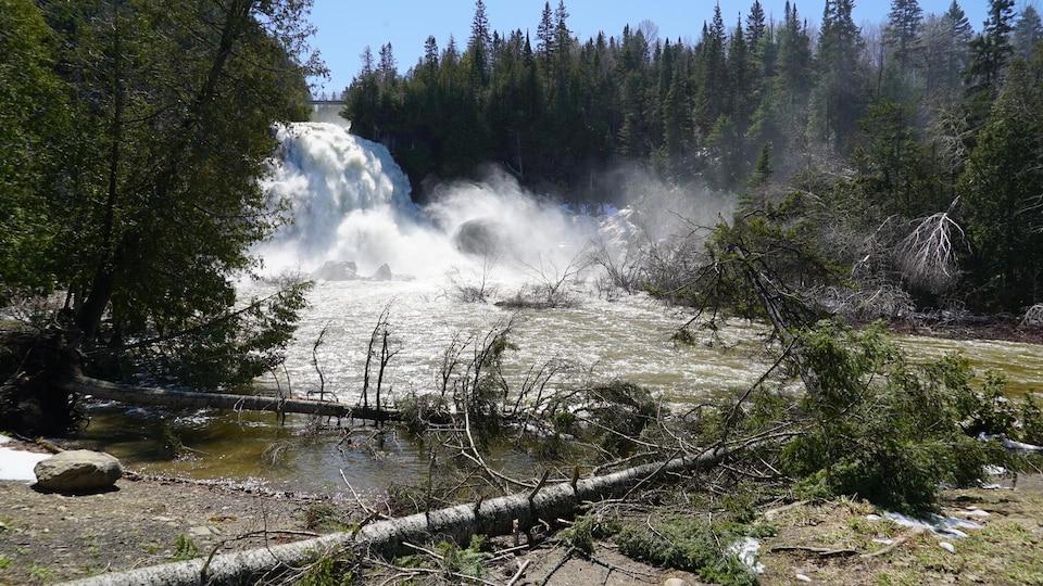 Des arbres cassés reposent sur le bord de la rivière.