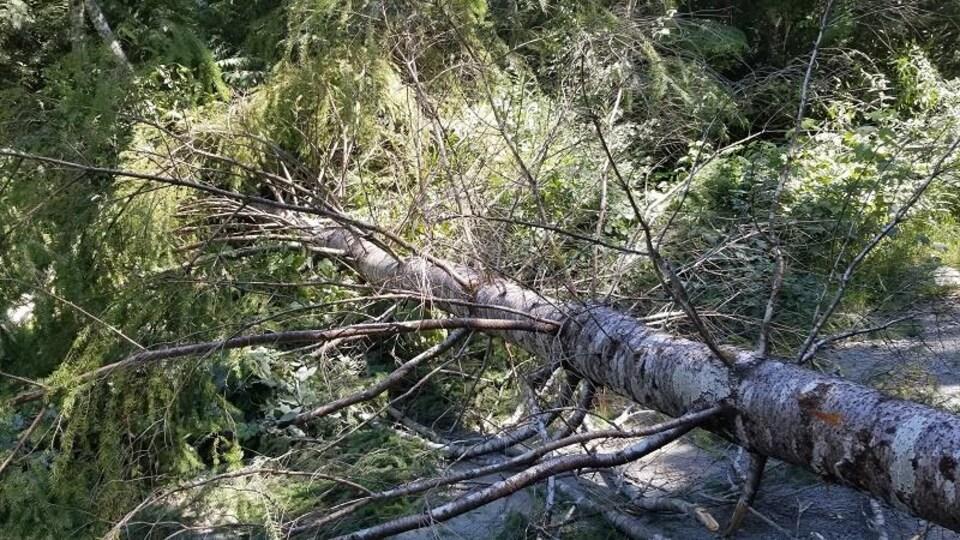 Un arbre abattu.