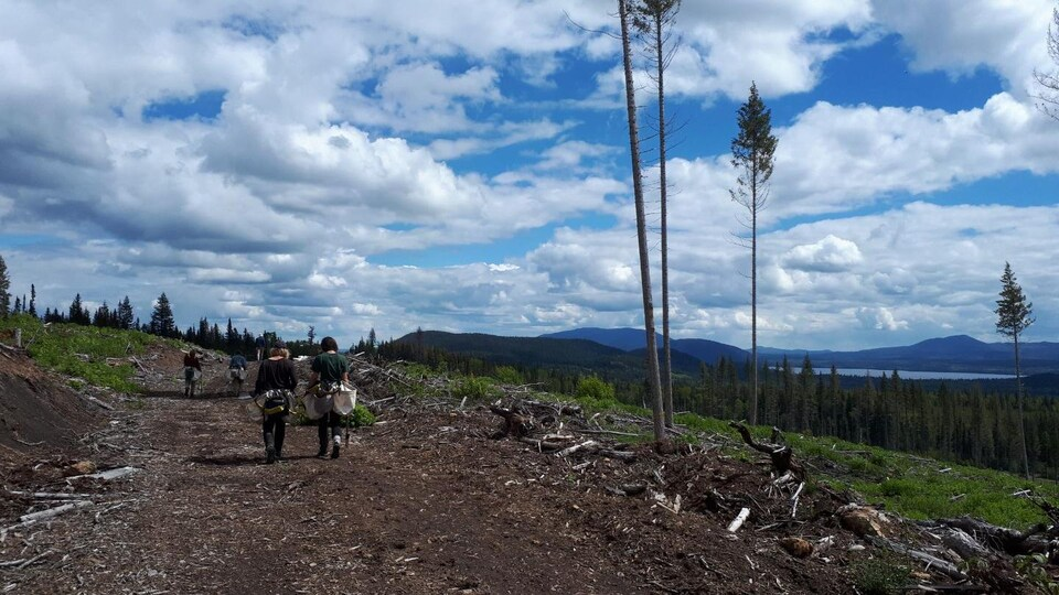 Deux personnes marchent sur un sentier forestier sous un ciel bleu avec quelques nuages.