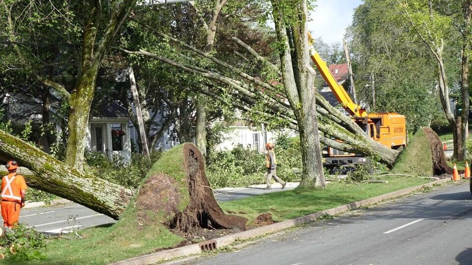 Des arbres tombés sur des maisons à Halifax.