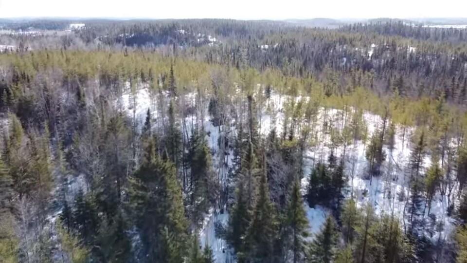 Une forêt vue l'hiver.