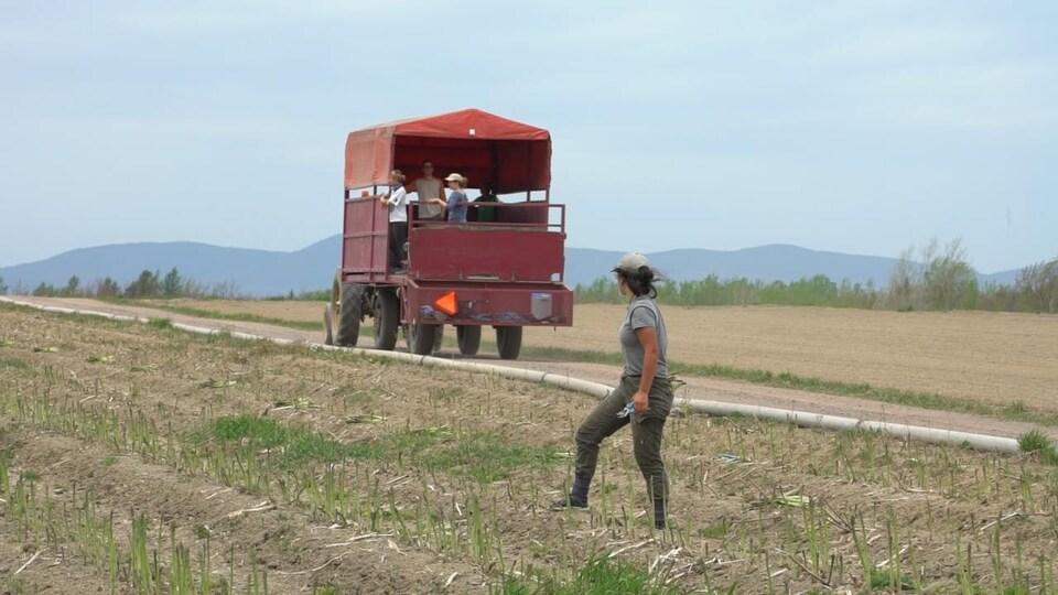 Une femme, asperge en main, regarde un tracteur passé debout au milieu d'un champ. La silhouette des Laurentides sont visibles en arrière-plan