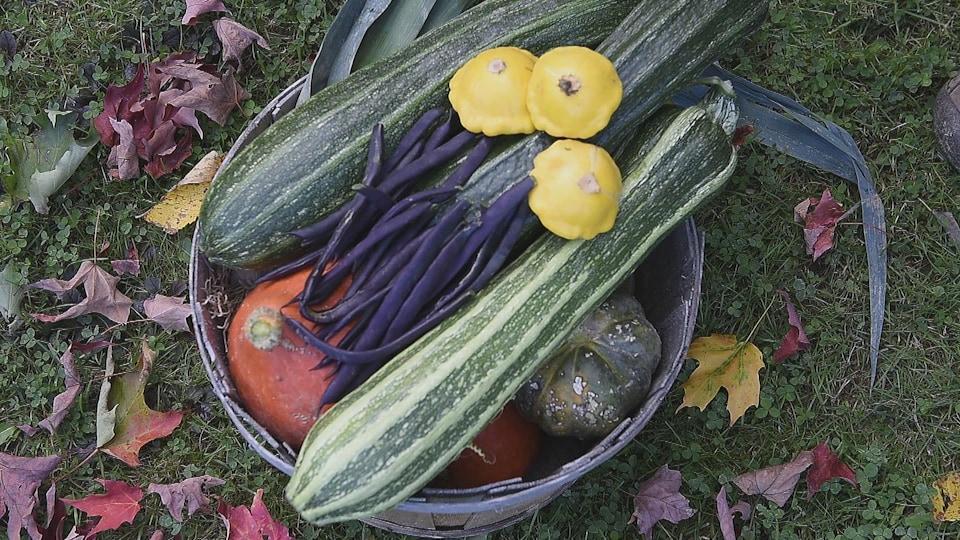 La production de légumes est variée et abondante.