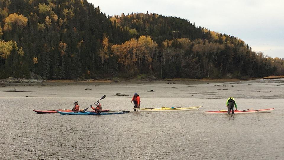 Quatre kayaks sur l'eau.