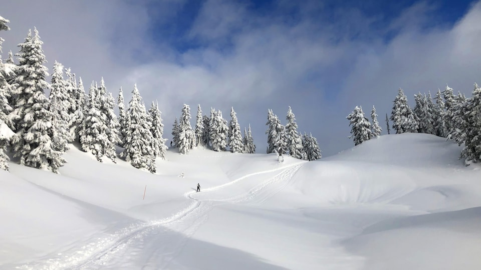 Une skieuse sur un sentier hors-piste.