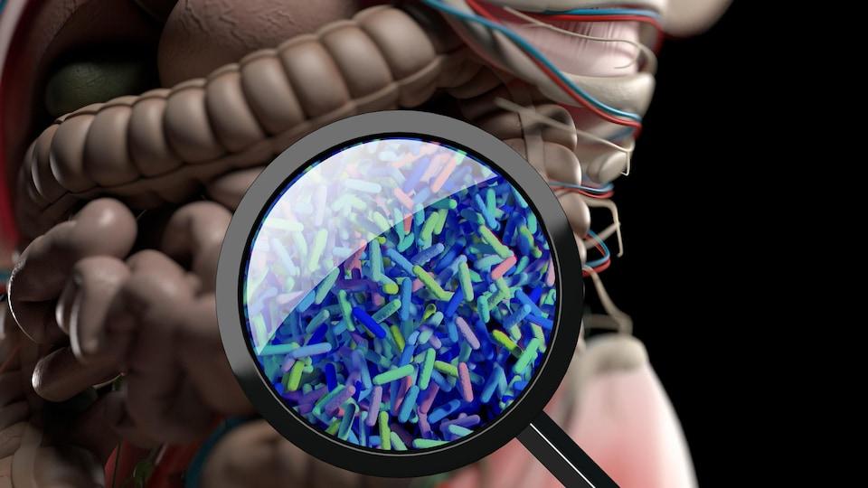 Représentation de bactéries à la loupe.