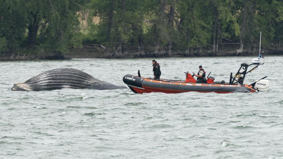 Une baleine flotte sur les eaux, immobile. Près d'elle, deux hommes dans une embarcation.