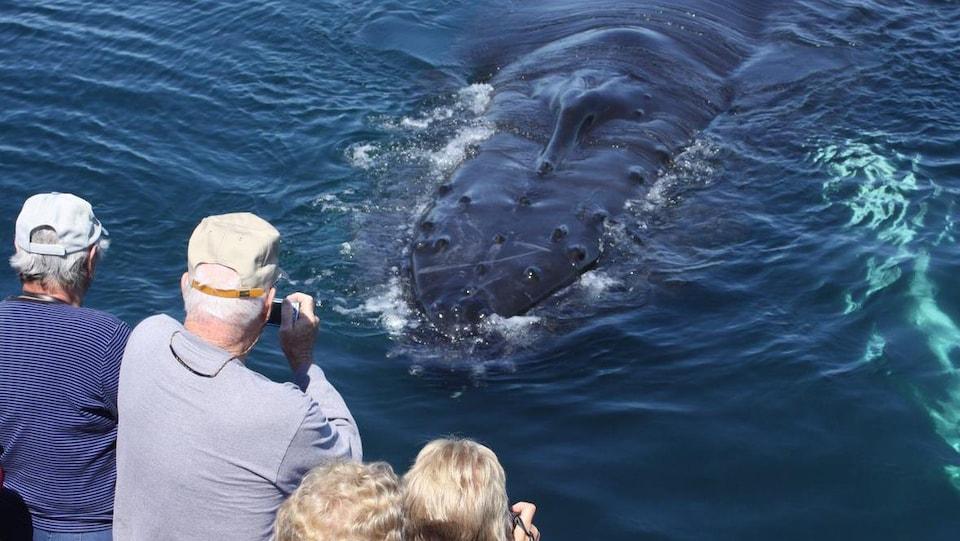 Des gens sur un bateau photographie la baleine qui passe tout près.
