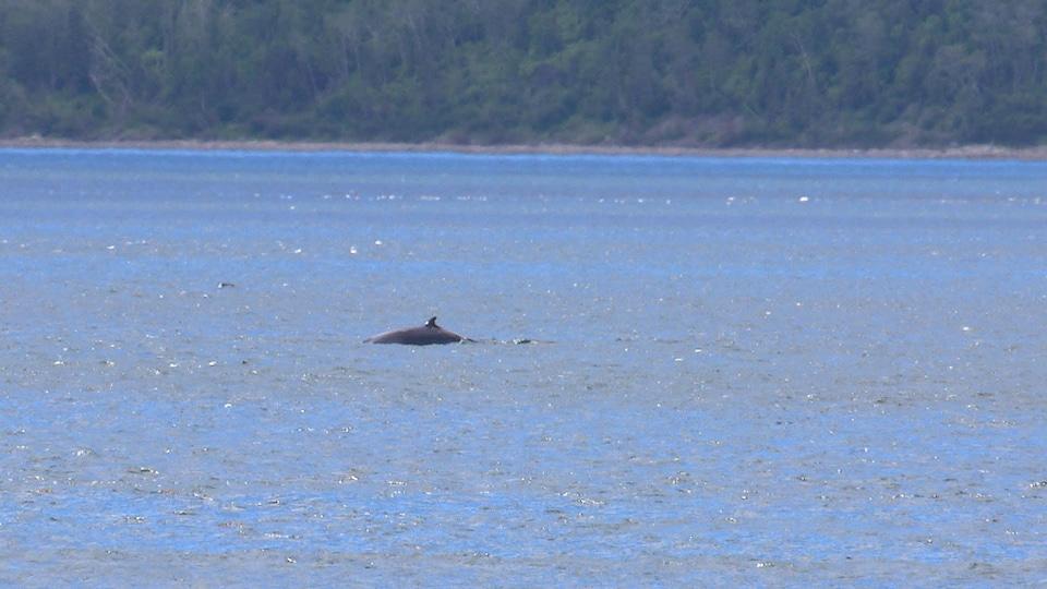 Une baleine au large du Cap-de-Bon-Désir