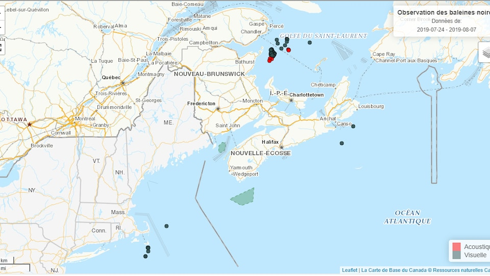 Une carte qui montre où les baleines ont été aperçues.