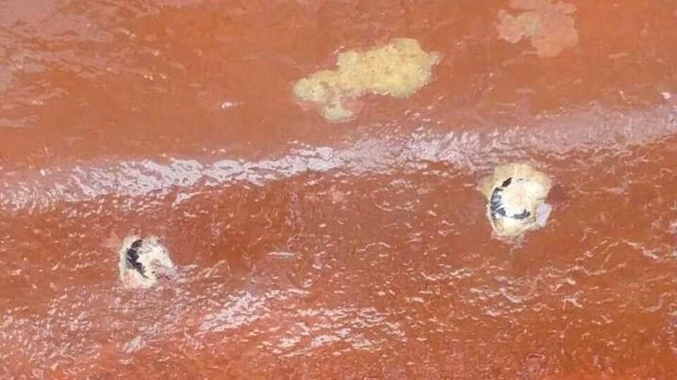 Deux trous ronds dans la coque orange d'un bateau.