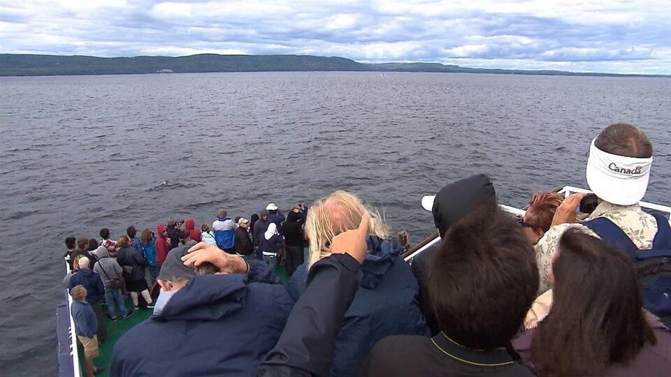 Une croisière aux baleines à Tadoussac
