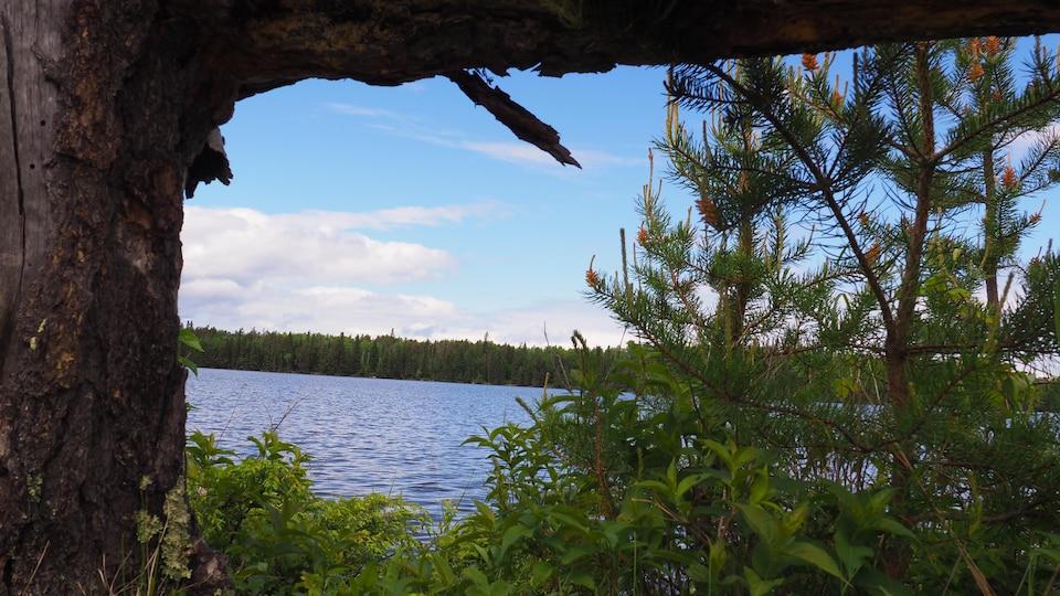 Un lac bordé par des arbres verts dans la forêt boréale.