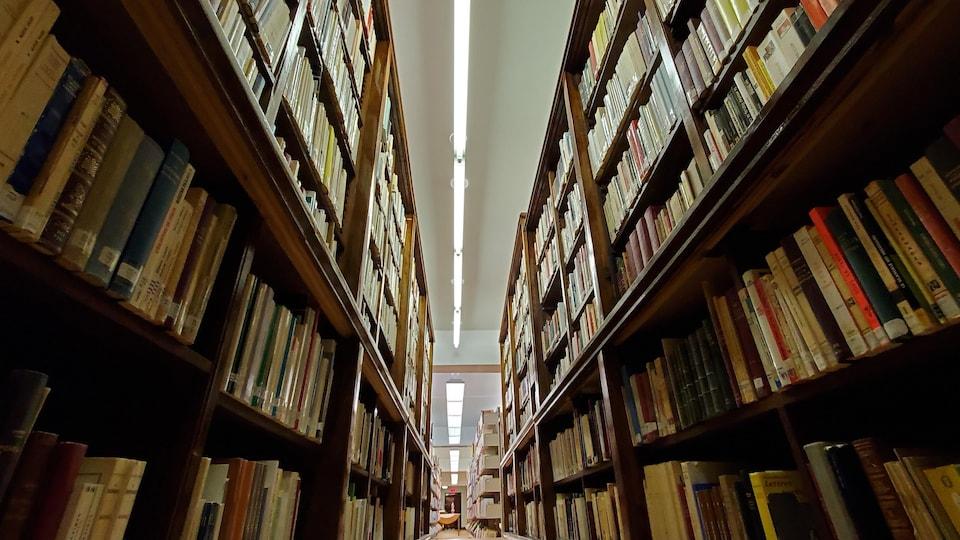 Les rayons d'une bibliothèque.