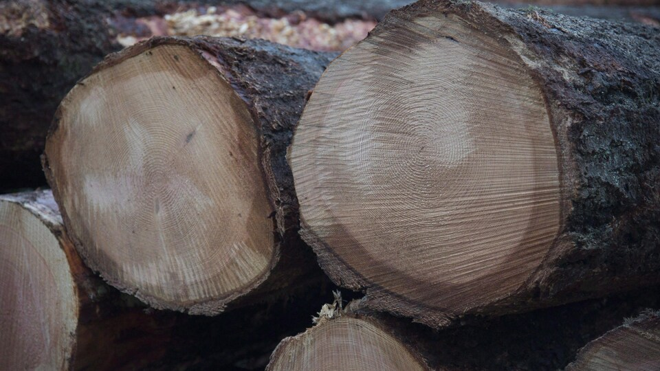 Des billots de bois empilés en Colombie-Britannique